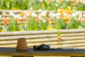 Binoculars and Plant Pot on Table on the Garden