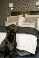 Winston in one of our Dog Friendly Double Bedrooms